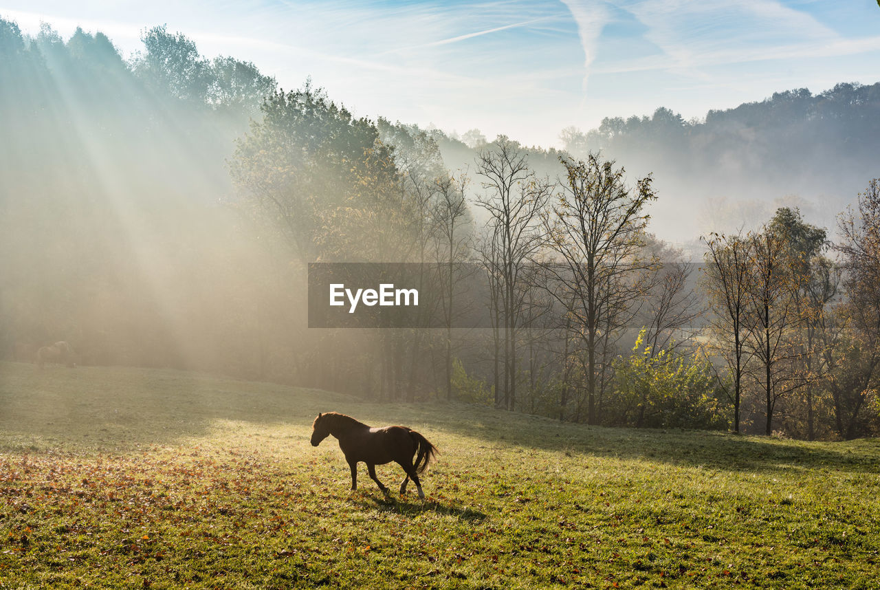 Horse Standing On Grassy Field Against Sky