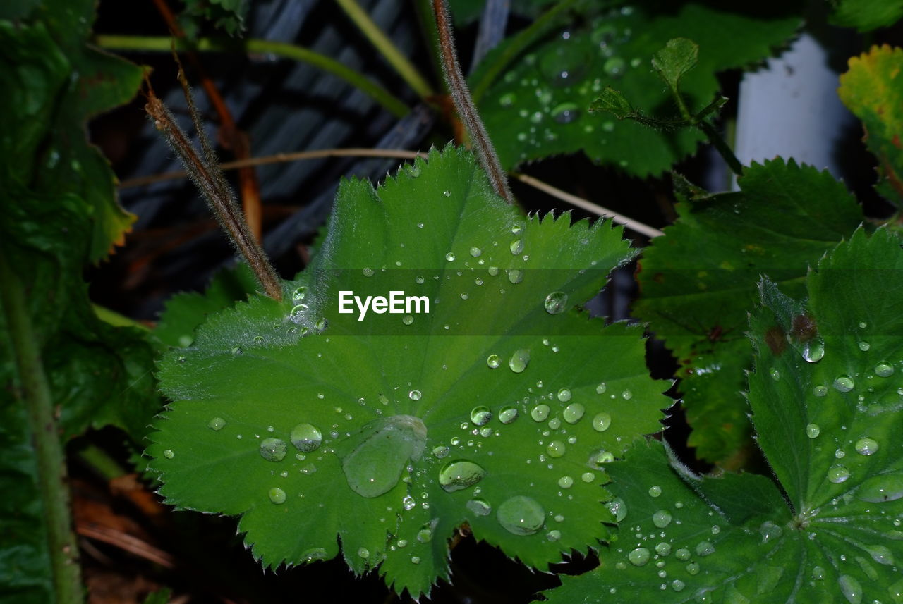 drop, leaf, water, green color, wet, nature, raindrop, close-up, weather, freshness, beauty in nature, plant, growth, no people, day, fragility, outdoors, purity, cold temperature