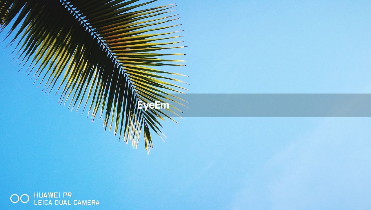blue, copy space, day, clear sky, low angle view, no people, outdoors, growth, close-up, tree, sky