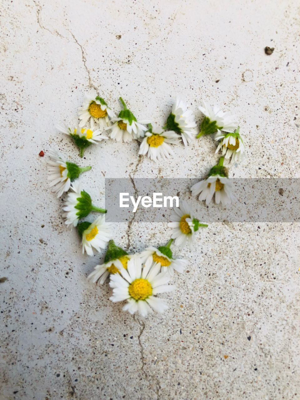 flower, flowering plant, plant, freshness, fragility, nature, vulnerability, no people, beauty in nature, growth, petal, close-up, day, high angle view, white color, outdoors, flower head, directly above, inflorescence, beauty, bright