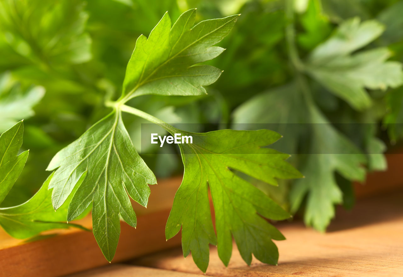 green color, leaf, plant part, no people, plant, close-up, nature, growth, table, selective focus, focus on foreground, beauty in nature, day, leaves, outdoors, freshness, food, wood - material, food and drink