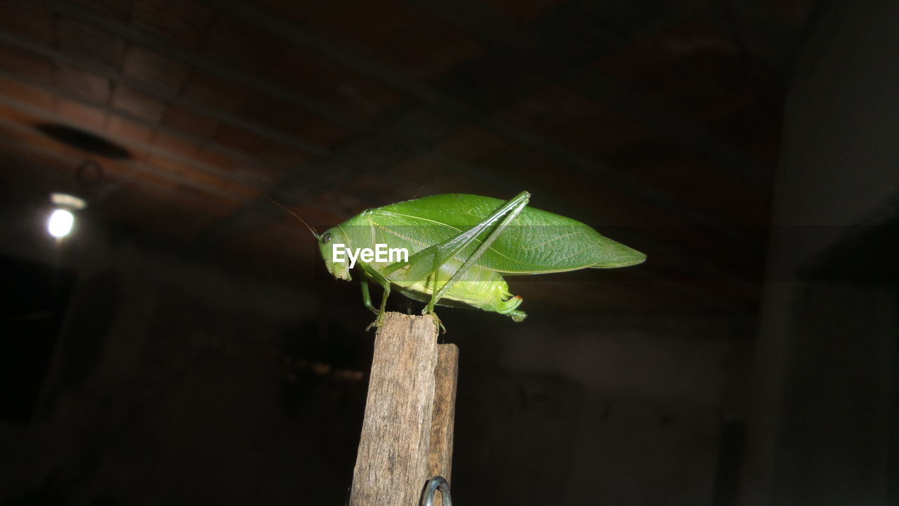 leaf, insect, close-up, animal themes, green color, one animal, animals in the wild, nature, no people, night, plant, outdoors