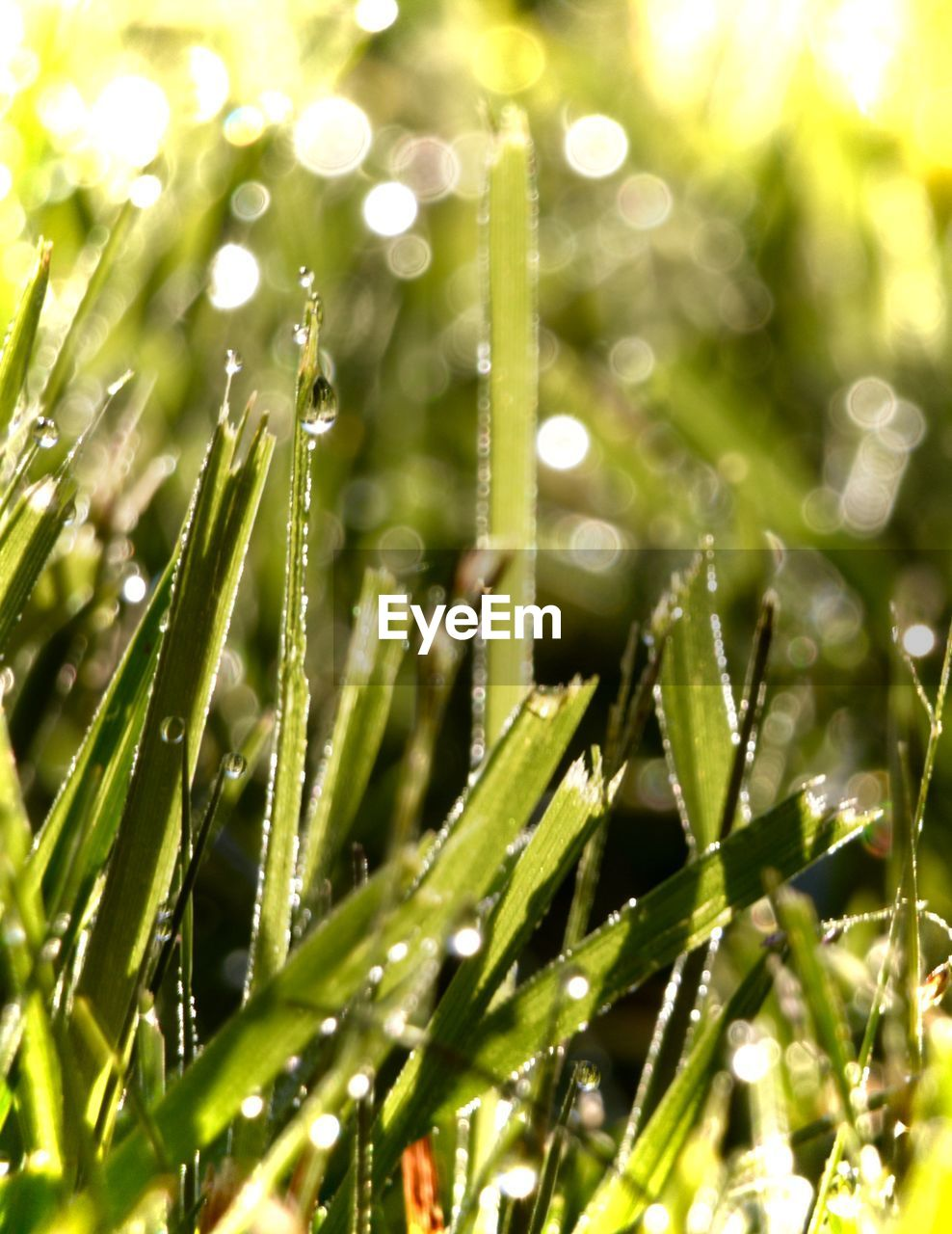 nature, growth, green color, plant, beauty in nature, drop, freshness, water, outdoors, close-up, no people, wet, fragility, day, grass, raindrop, purity, frond, needle