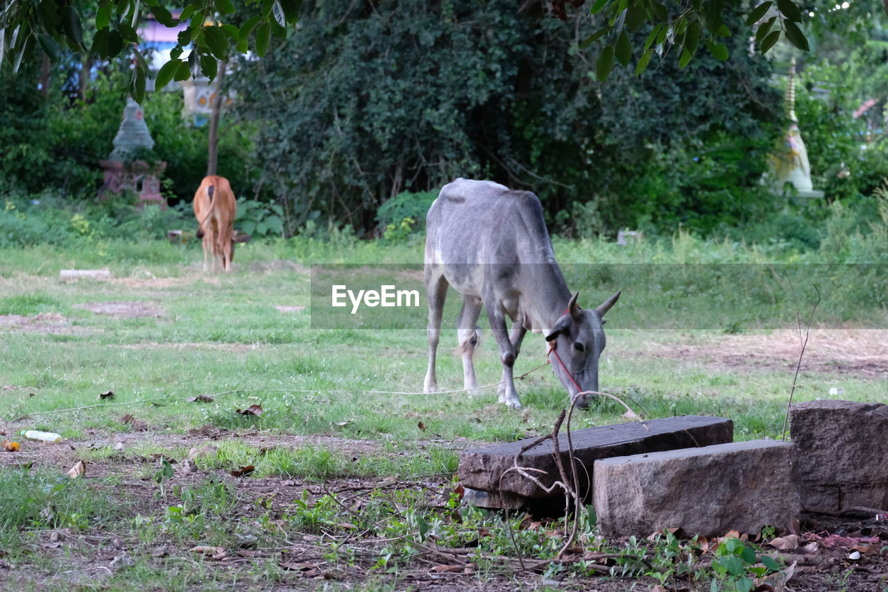 mammal, animal themes, animal, plant, domestic animals, vertebrate, domestic, grass, group of animals, tree, land, livestock, nature, day, field, animal wildlife, pets, no people, agriculture, grazing, outdoors, herbivorous