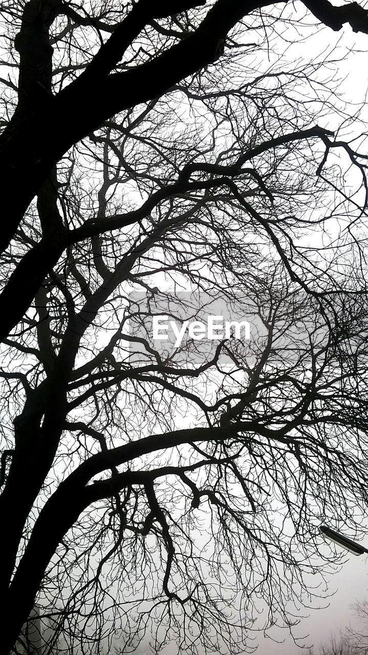 tree, branch, bare tree, beauty in nature, nature, low angle view, no people, tranquility, day, outdoors, silhouette, tree trunk, sky, scenics, close-up