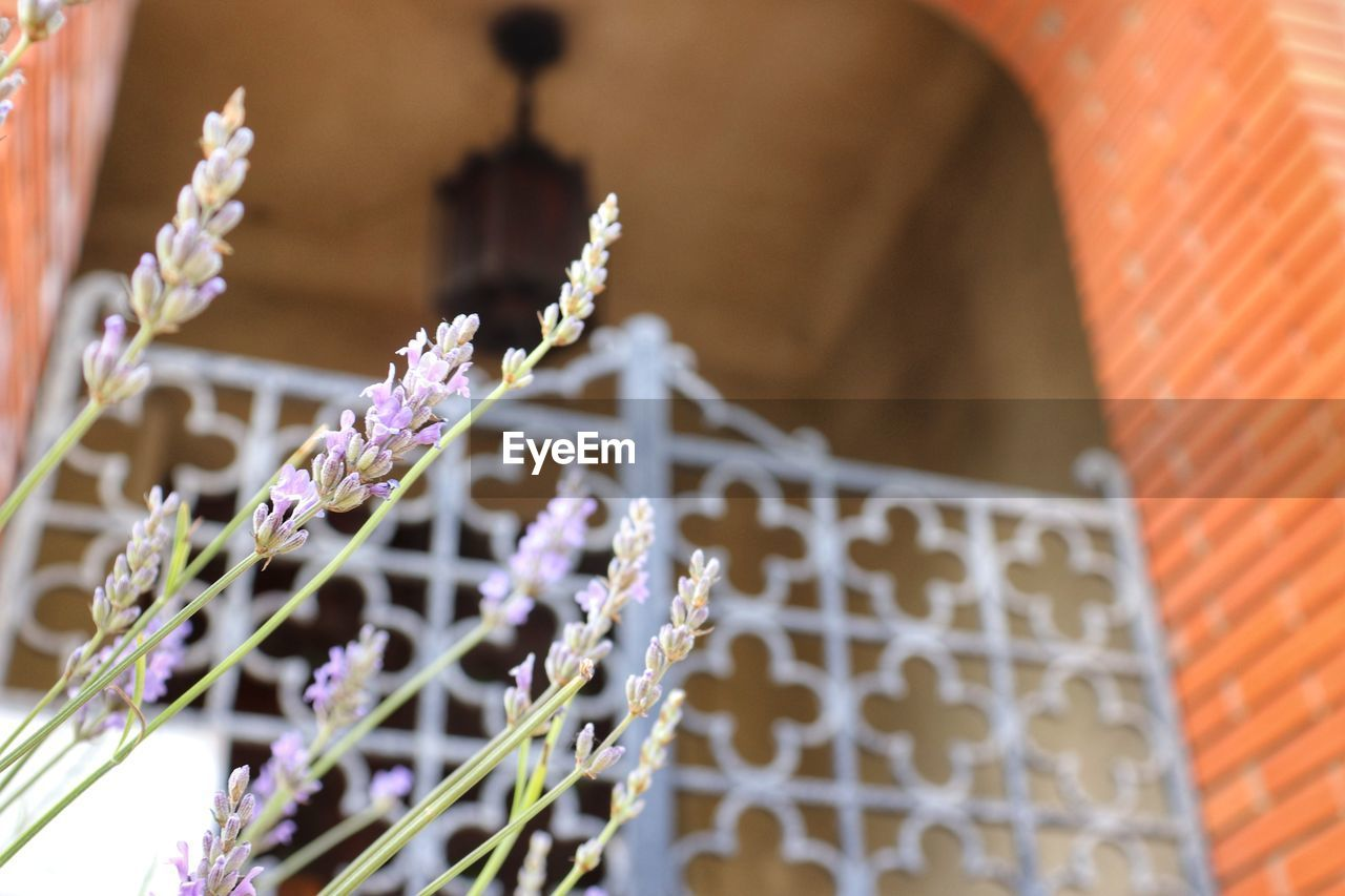 plant, flowering plant, flower, focus on foreground, growth, fragility, no people, architecture, nature, vulnerability, built structure, beauty in nature, day, close-up, freshness, selective focus, outdoors, building exterior, building, potted plant, purple, flower pot