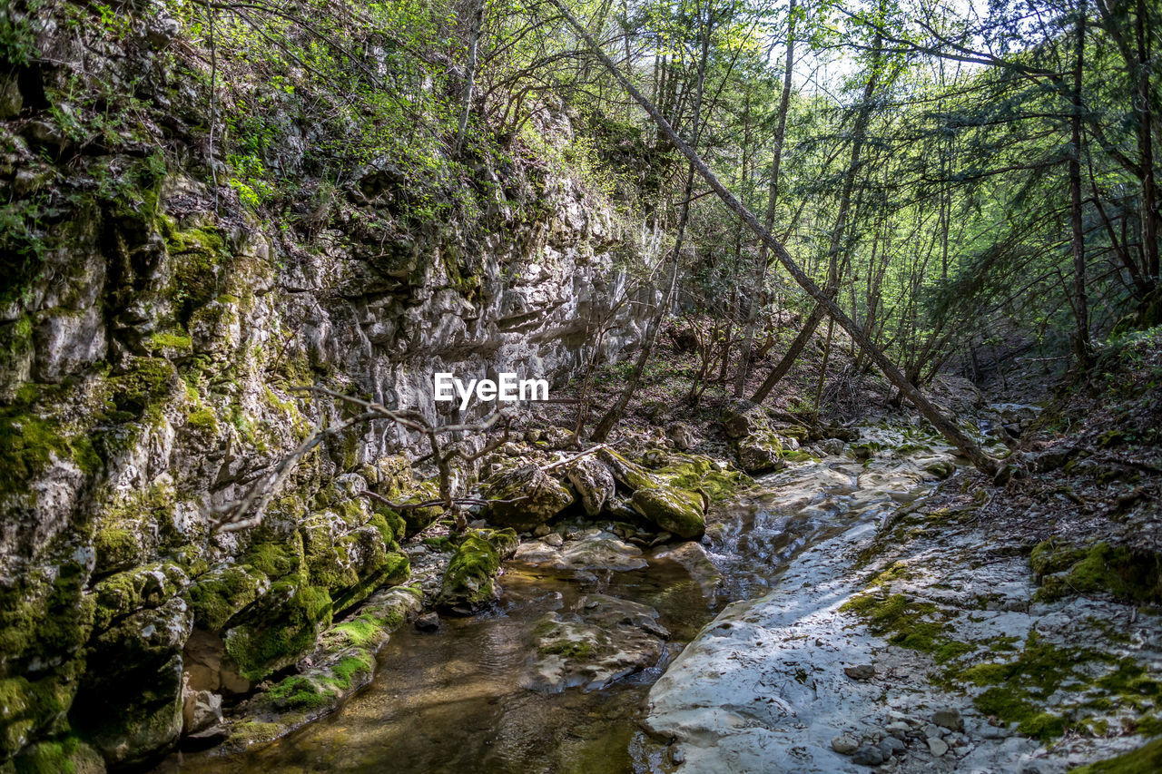 tree, forest, plant, water, land, nature, no people, beauty in nature, scenics - nature, non-urban scene, tranquility, rock, day, solid, rock - object, tranquil scene, flowing water, outdoors, downloading, stream - flowing water, woodland, flowing, rainforest