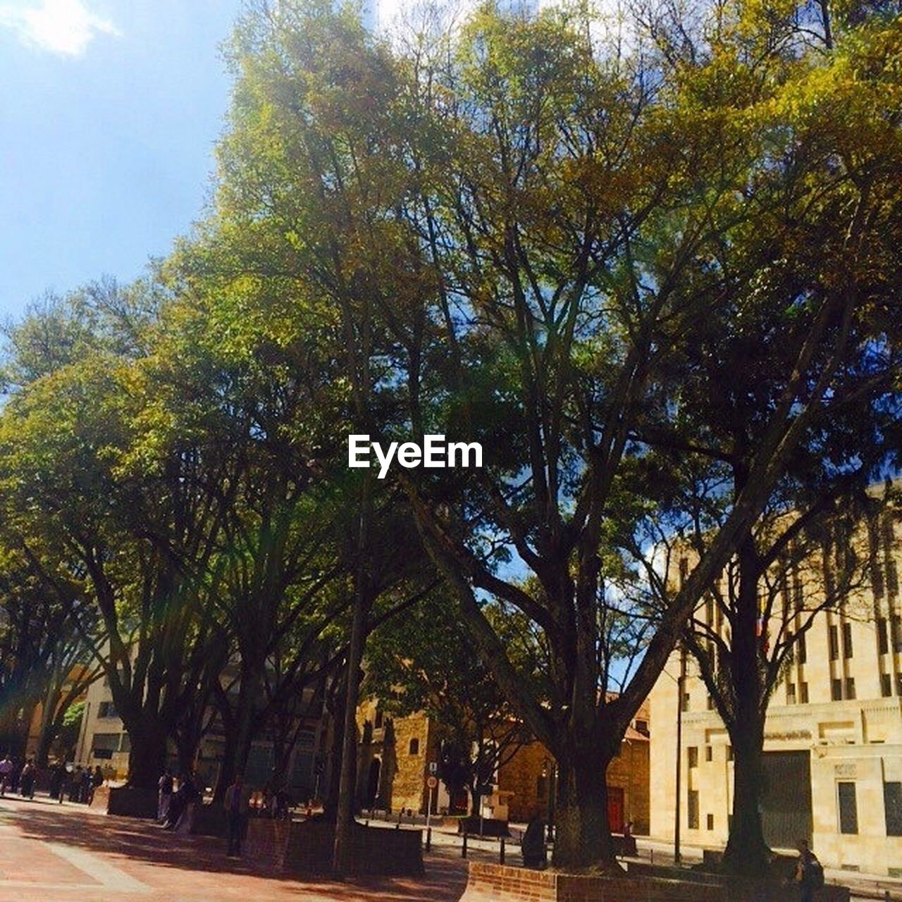 tree, architecture, built structure, building exterior, street, outdoors, day, growth, city, road, no people, nature, sky
