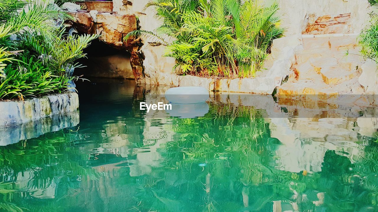 water, plant, outdoors, green color, nature, growth, leaf, no people, day, architecture, beauty in nature