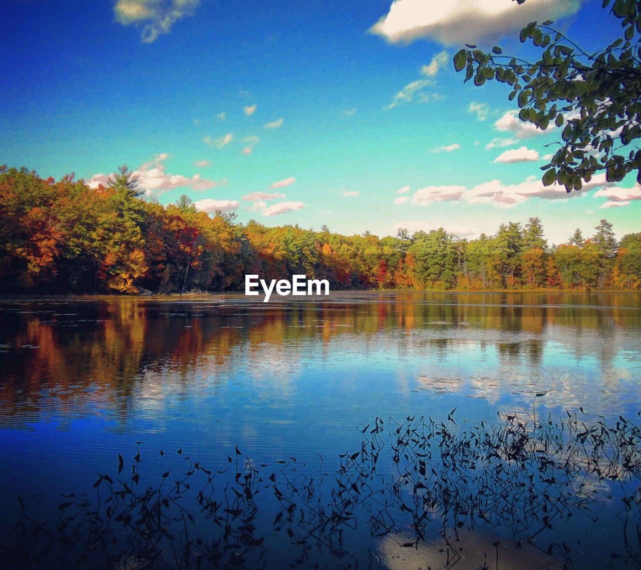 water, tree, lake, nature, beauty in nature, reflection, scenics, autumn, tranquil scene, tranquility, no people, sky, leaf, growth, outdoors, day, waterfront, floating on water, animal themes, bird