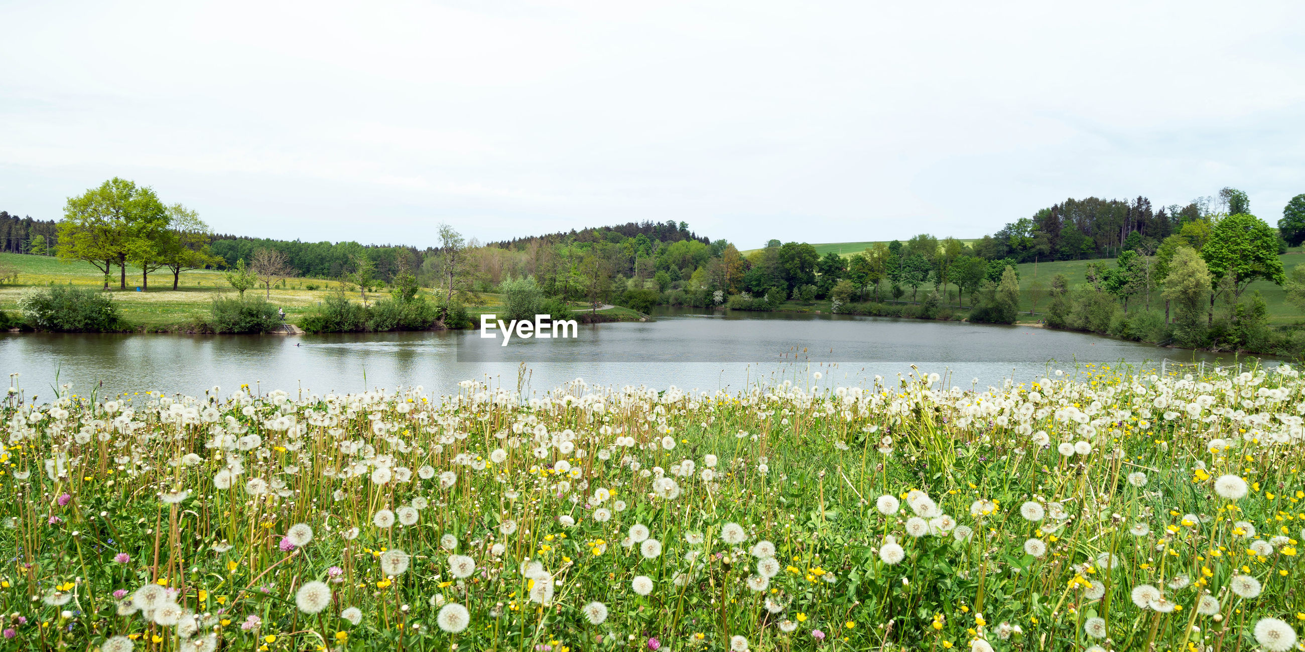 SCENIC VIEW OF LAKE AND PLANTS AGAINST SKY