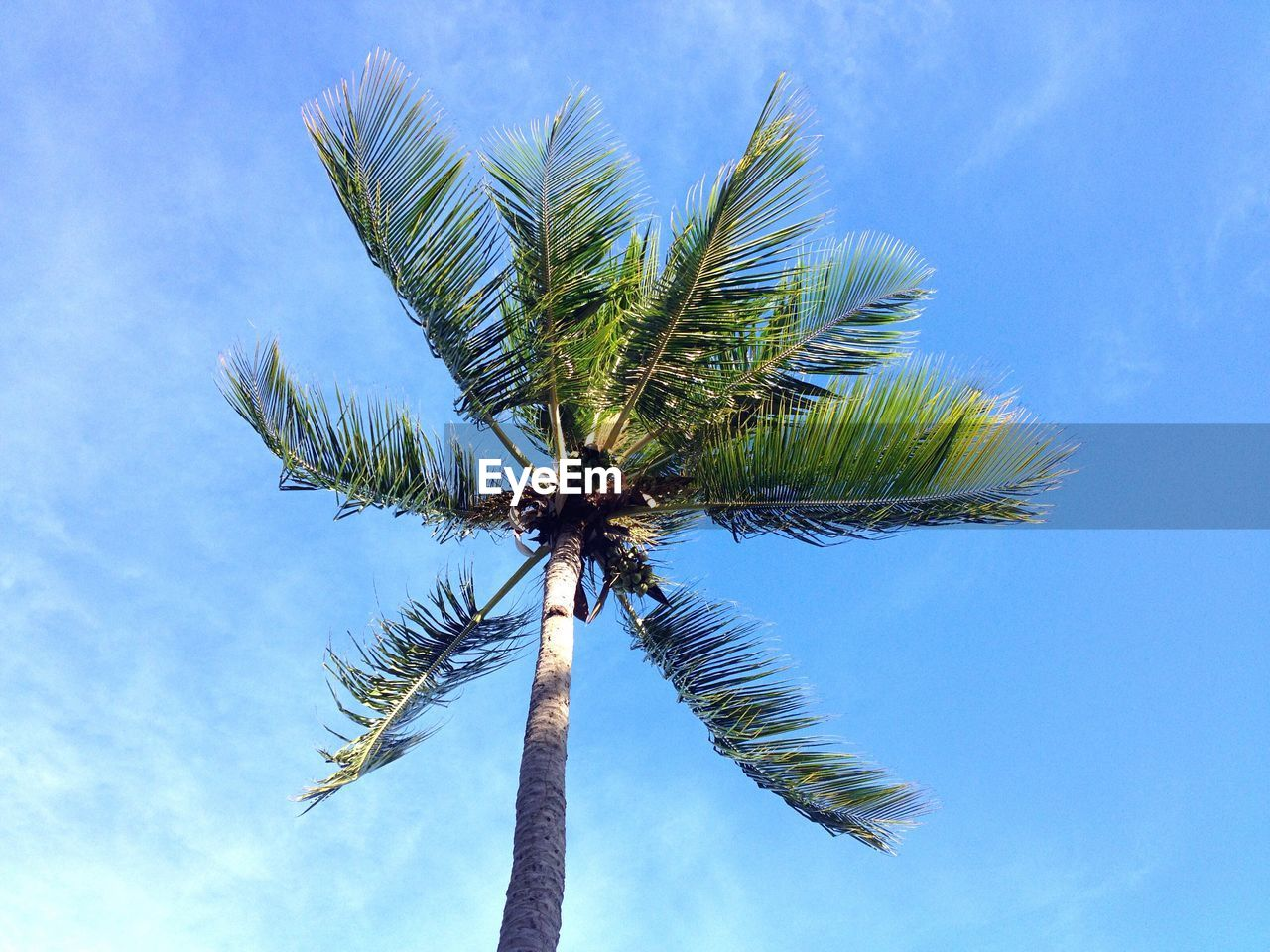 palm tree, tree, low angle view, sky, blue, day, outdoors, no people, palm frond, nature, tree trunk, growth, beauty in nature