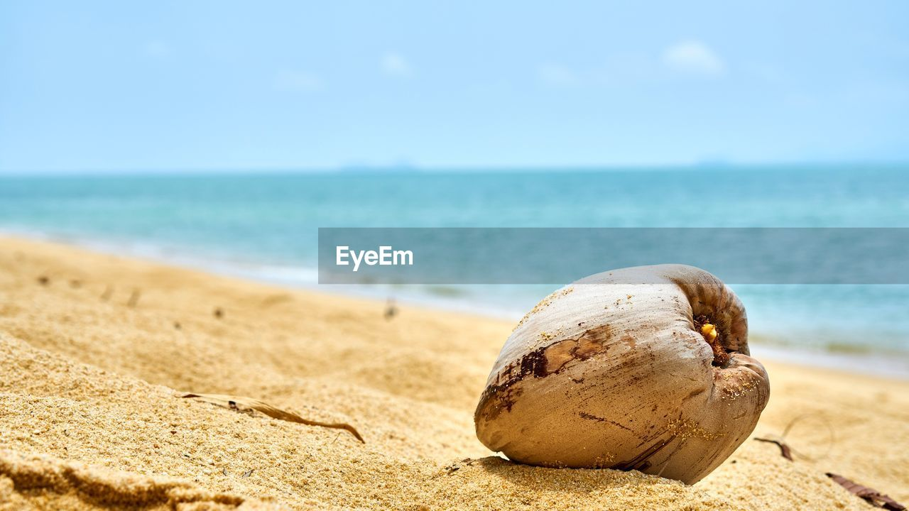 sea, beach, sand, horizon over water, nature, shore, water, day, tranquil scene, scenics, beauty in nature, outdoors, sky, tranquility, focus on foreground, no people, close-up