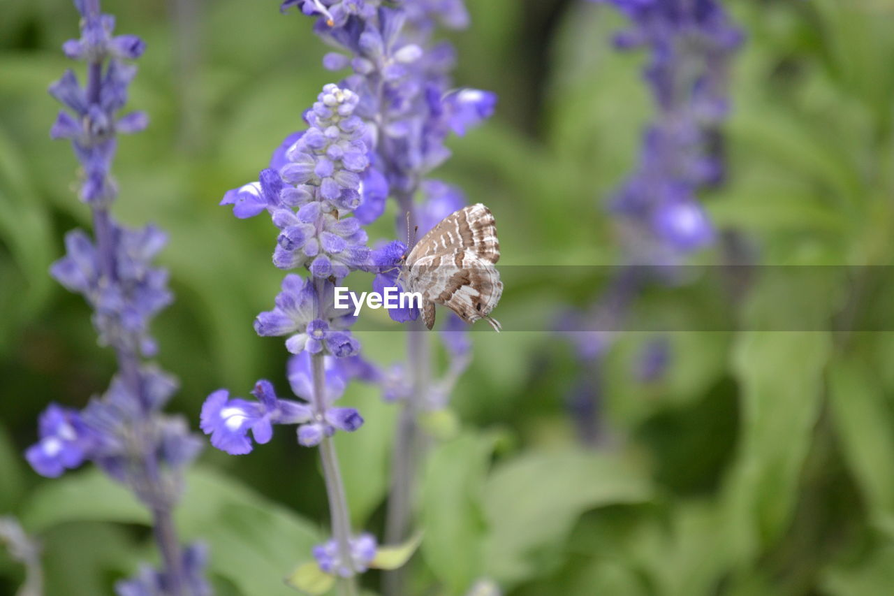 insect, flower, nature, animal themes, one animal, fragility, purple, beauty in nature, animals in the wild, plant, day, no people, outdoors, growth, bee, pollination, close-up, flower head, freshness