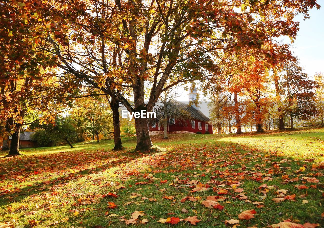 autumn, change, tree, plant, plant part, leaf, park, nature, beauty in nature, orange color, architecture, built structure, grass, day, no people, park - man made space, falling, tranquility, growth, land, outdoors, leaves, fall