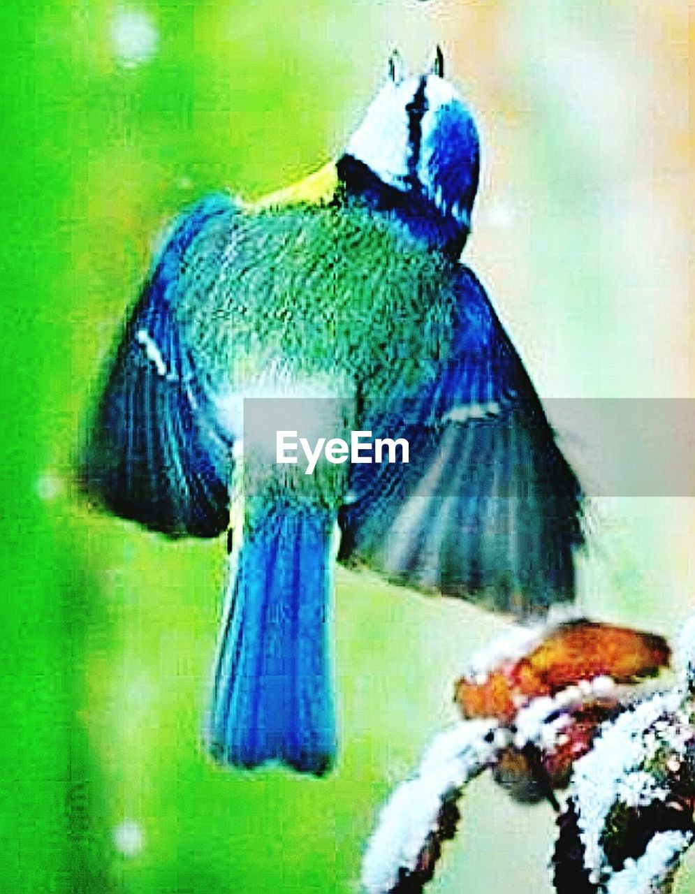 one animal, animal themes, no people, indoors, close-up, domestic animals, day, bird