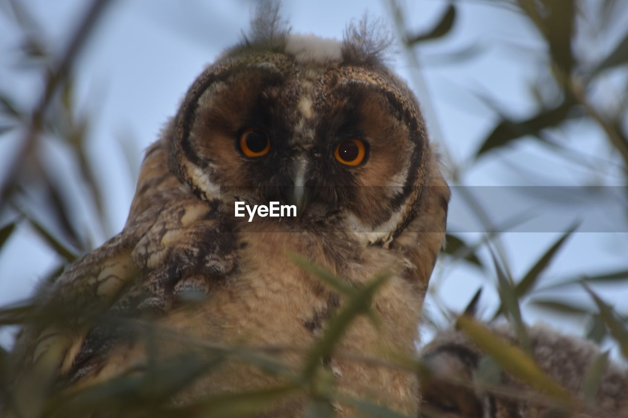 animal themes, animal, selective focus, one animal, animals in the wild, animal wildlife, vertebrate, looking at camera, owl, portrait, bird of prey, no people, tree, branch, bird, nature, low angle view, day, young animal, primate, outdoors, yellow eyes, animal eye