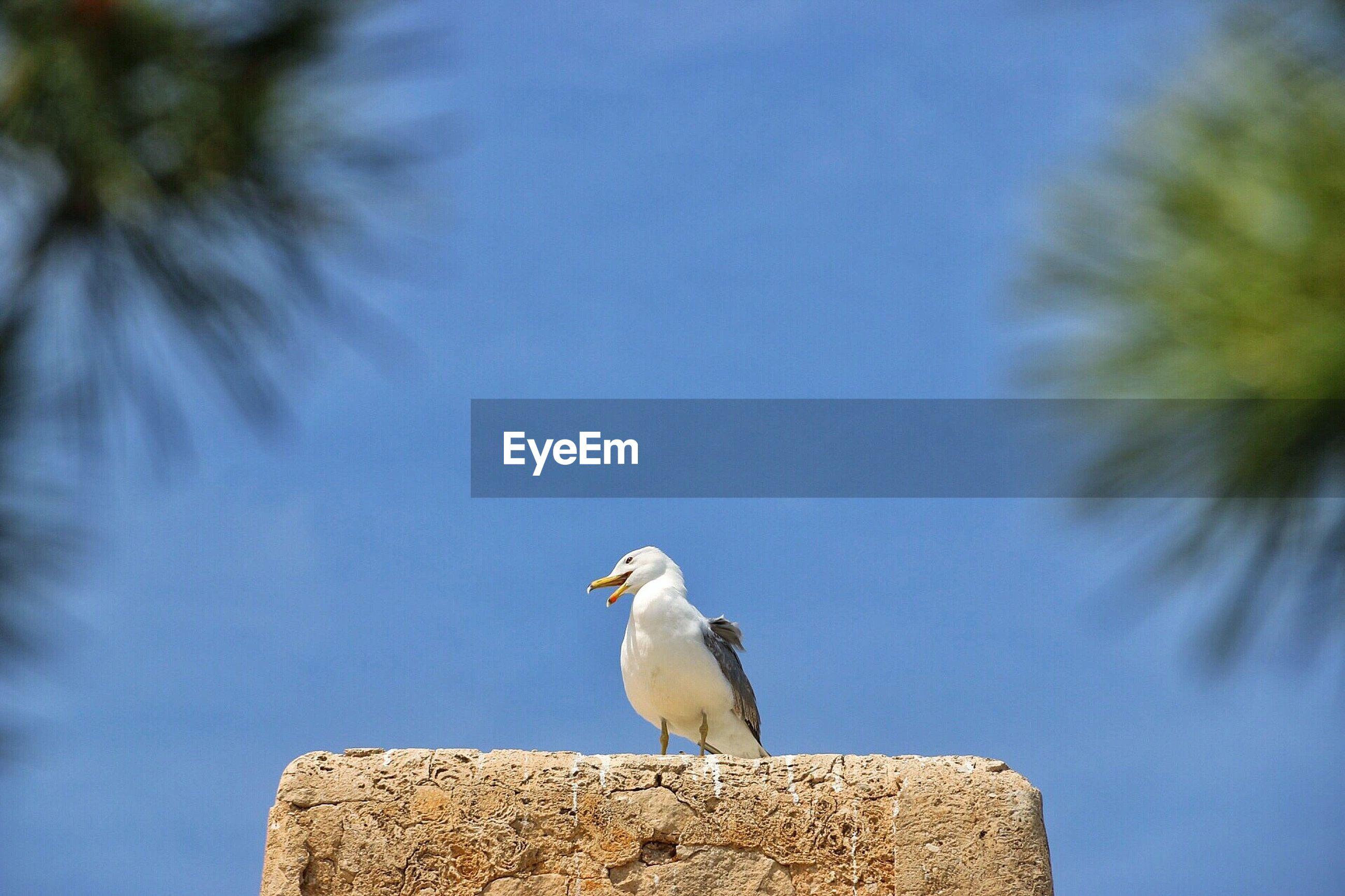 Bird perching on stone against sky
