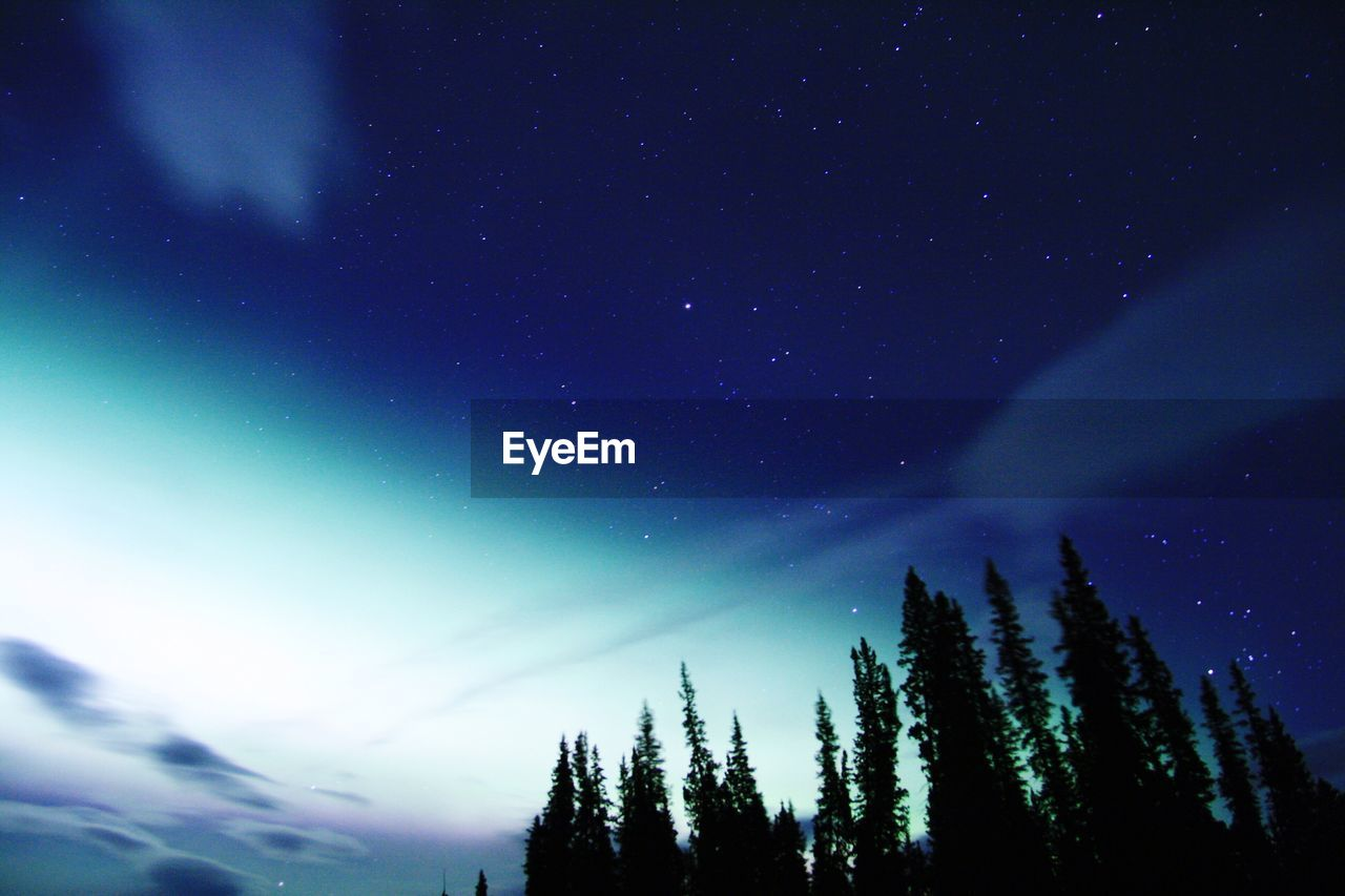 Aurora Borealis And Star Field With Silhouette Trees