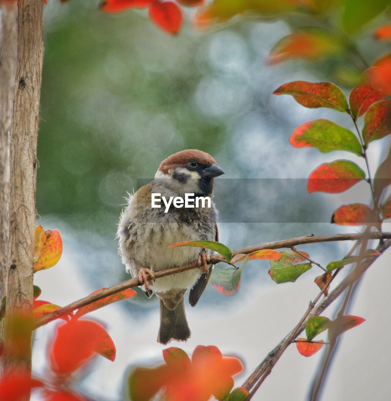 vertebrate, animal themes, bird, animal, animal wildlife, animals in the wild, one animal, plant, perching, branch, tree, plant part, leaf, nature, day, no people, focus on foreground, close-up, outdoors, beauty in nature