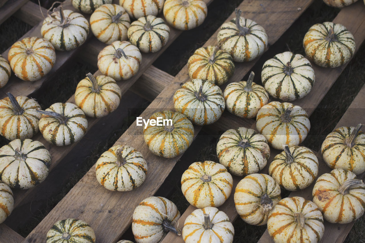 High angle view of pumpkins