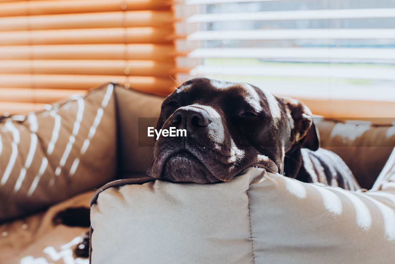 Close-up of dog resting on pet bed at home