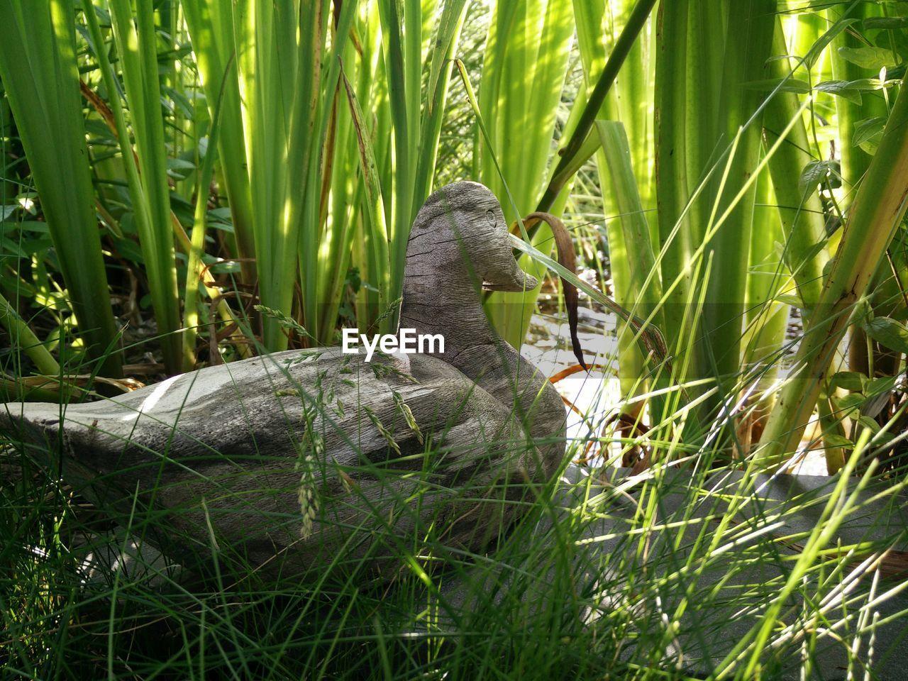 Wooden duck amidst plants
