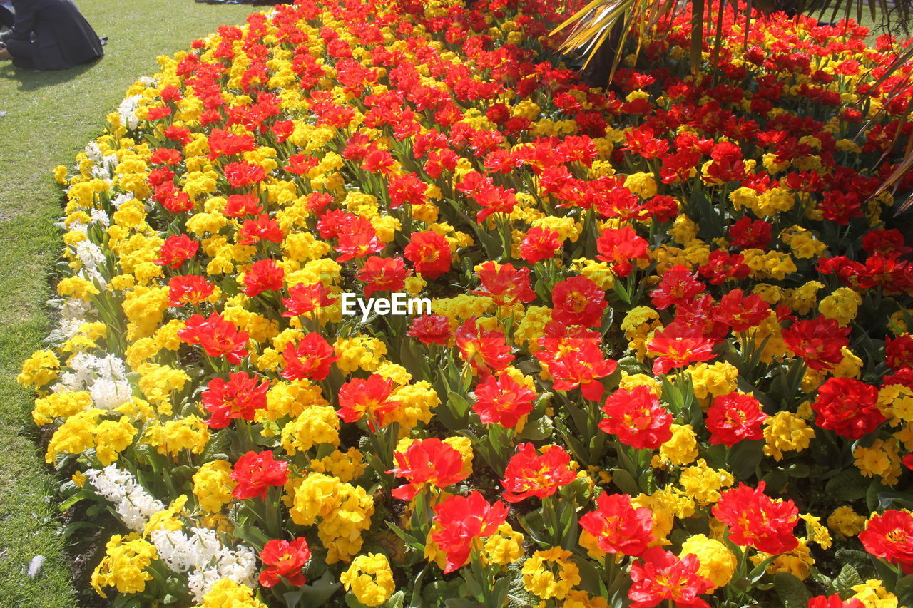 flower, beauty in nature, freshness, fragility, nature, petal, growth, flower head, blooming, no people, yellow, plant, red, outdoors, marigold, flowerbed, day, flower market, close-up