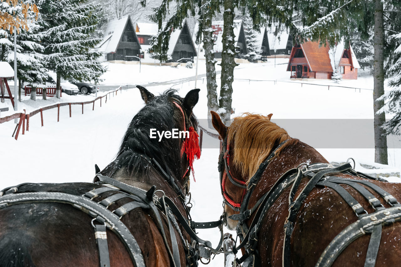 snow, winter, cold temperature, domestic, pets, animal, domestic animals, vertebrate, mammal, animal themes, one animal, horse, livestock, working animal, animal wildlife, horse cart, cart, no people, outdoors, herbivorous, snowing, warm clothing