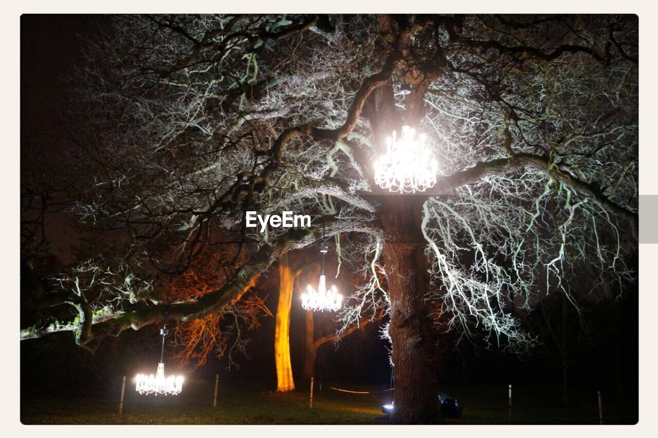illuminated, night, tree, outdoors, no people, forest, low angle view, cave, nature, beauty in nature