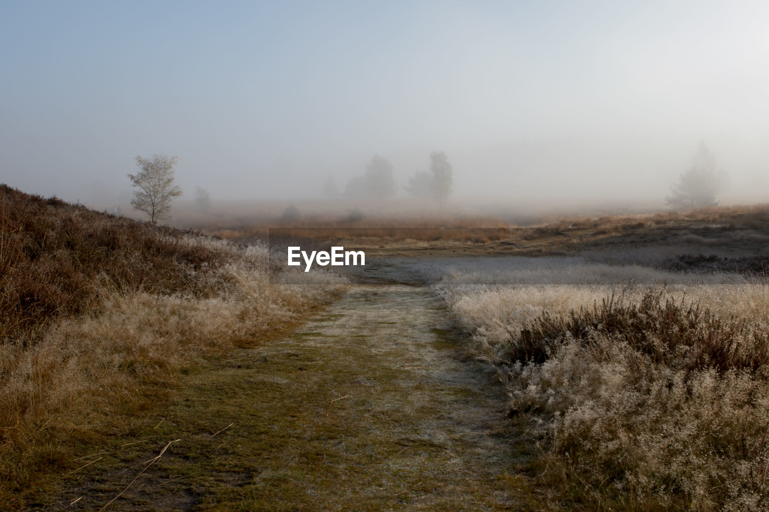 DIRT ROAD AMIDST FIELD AGAINST CLEAR SKY DURING FOGGY WEATHER