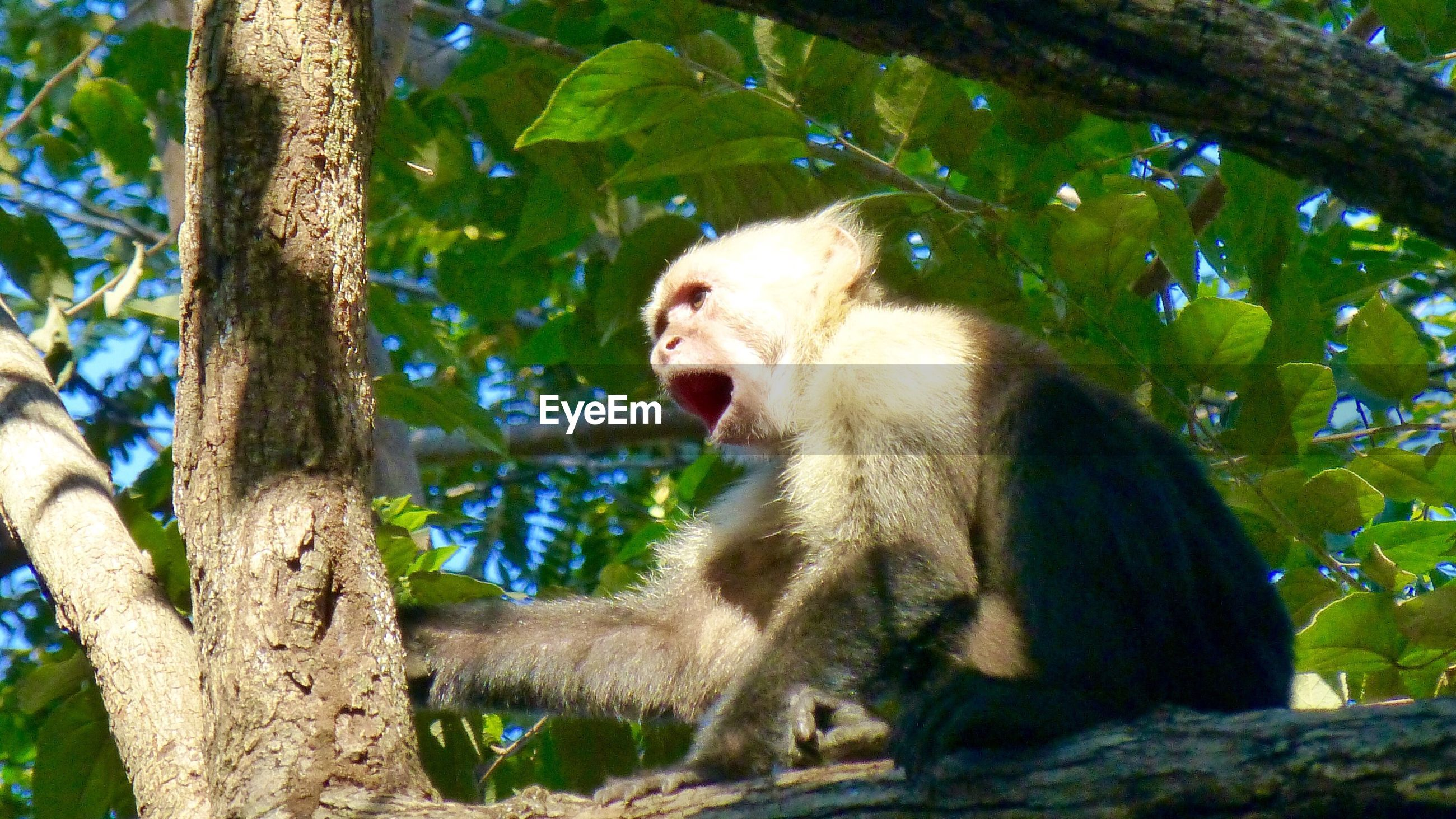 Shot of monkey perched on tree
