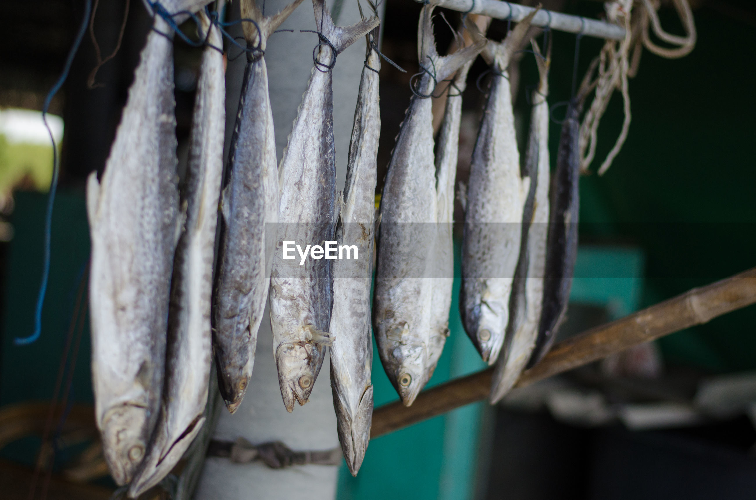 Close-up of dried fish hanging at market for sale