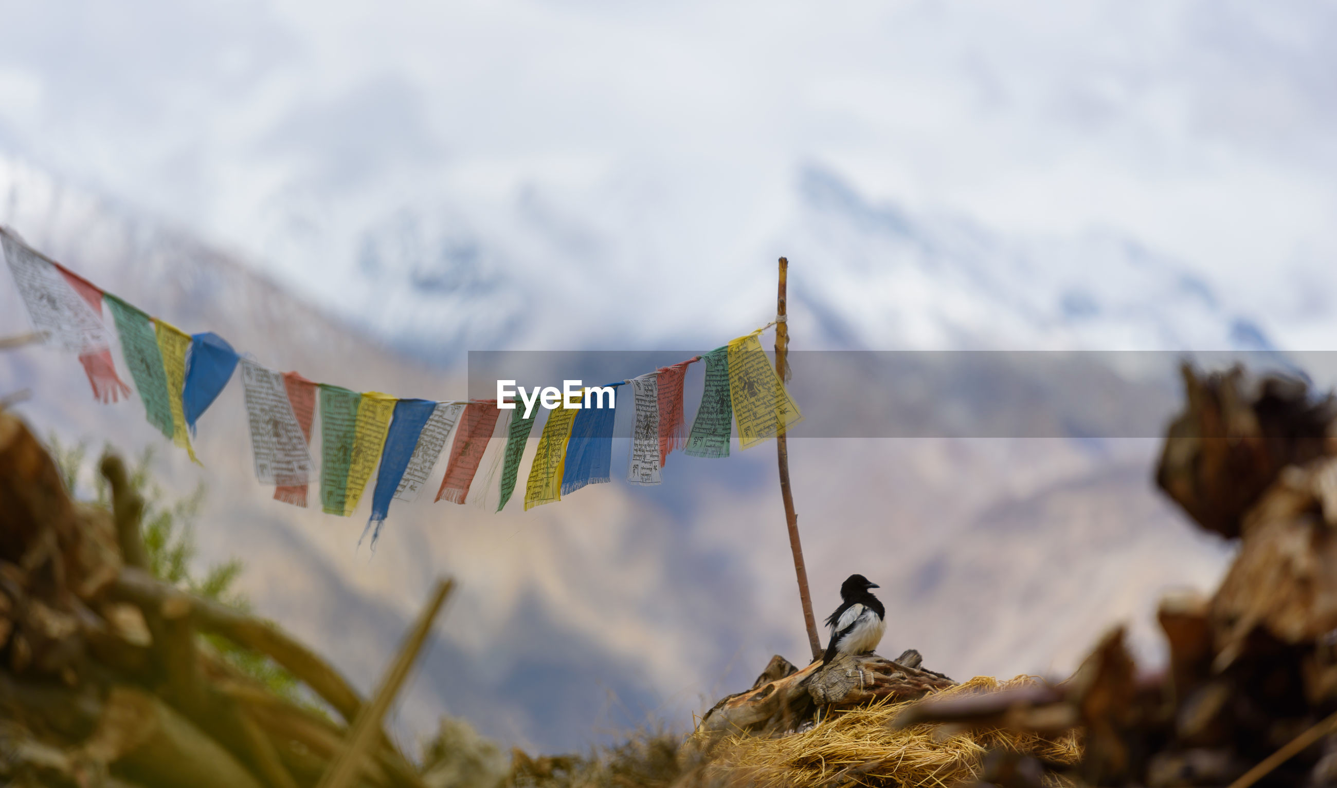 Close-up of bunting flags hanging against mountains