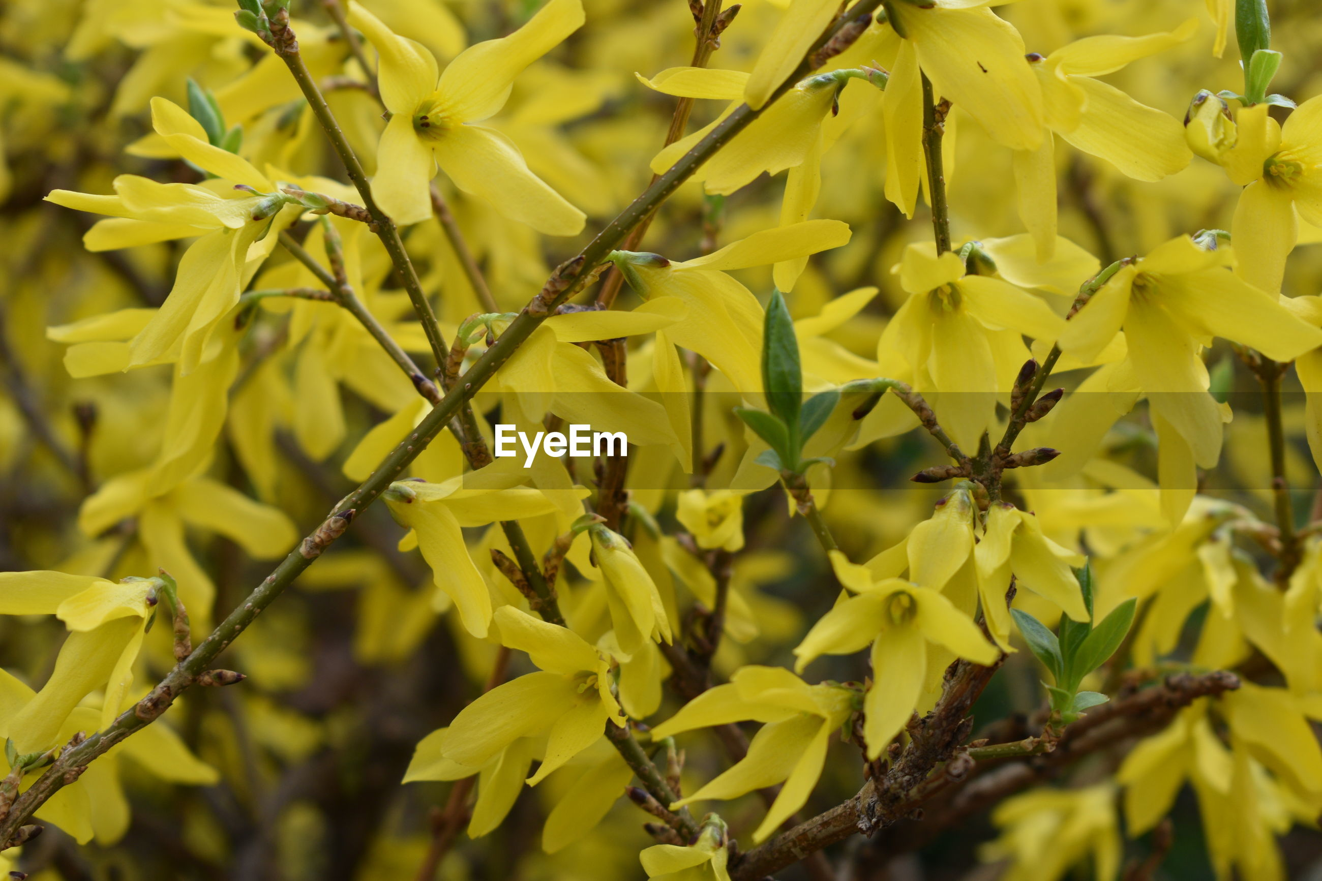 CLOSE-UP OF YELLOW FLOWERING LEAVES ON PLANT
