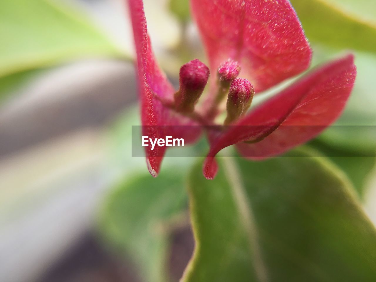 growth, nature, flower, beauty in nature, fragility, red, plant, close-up, petal, selective focus, no people, freshness, outdoors, blooming, day, flower head