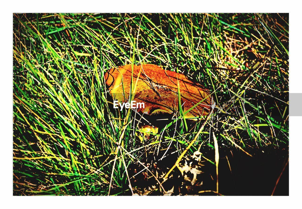 High angle view of mushroom on grassy field
