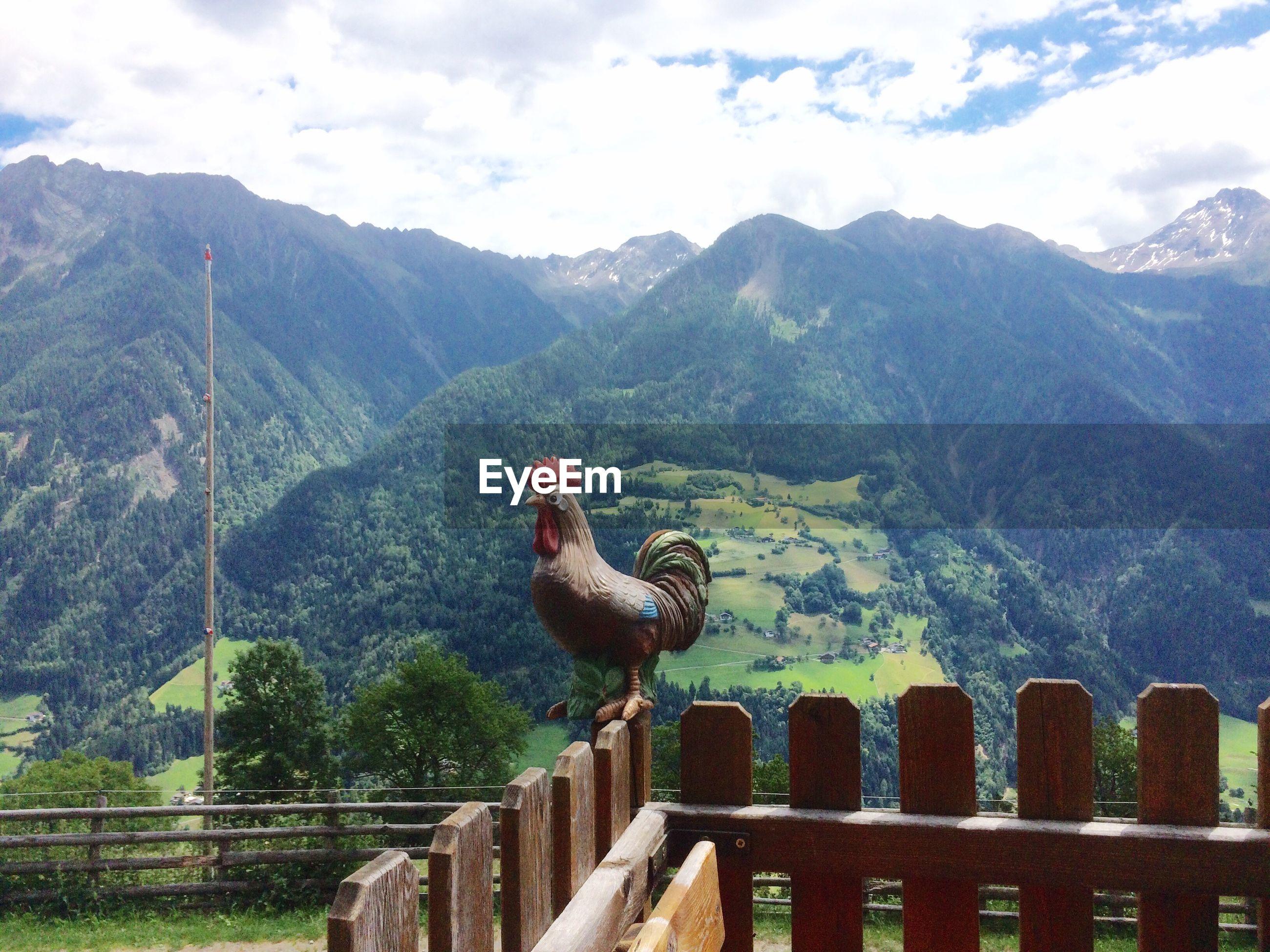 VIEW OF BIRDS ON MOUNTAIN RANGE