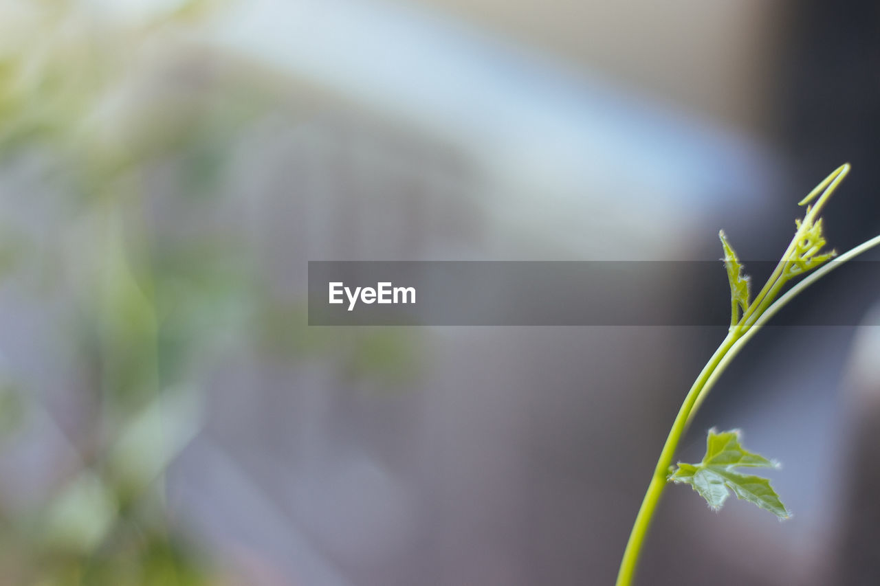 growth, plant, leaf, plant part, green color, beauty in nature, close-up, no people, selective focus, nature, day, focus on foreground, outdoors, beginnings, fragility, vulnerability, seedling, freshness, botany, plant stem