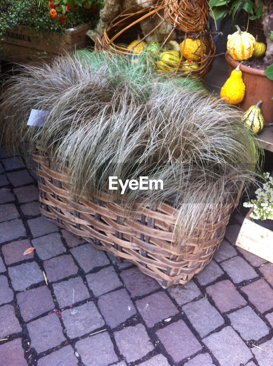 basket, outdoors, high angle view, day, no people, flower, domestic animals, grass, close-up, nature