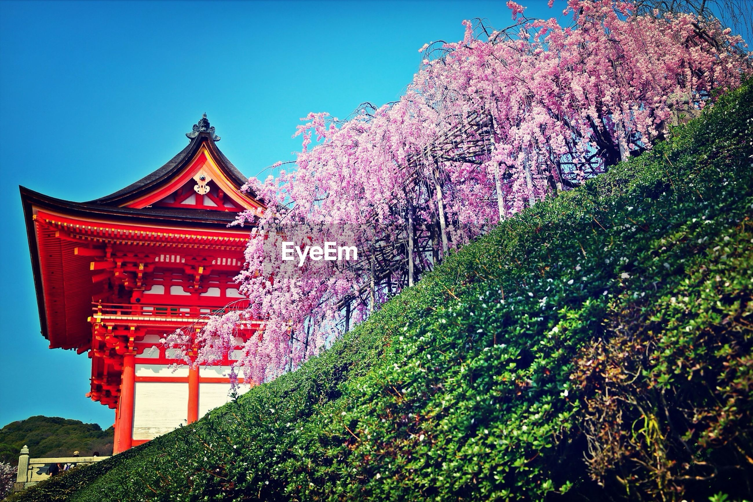 tree, no people, outdoors, day, beauty in nature, growth, low angle view, nature, red, blossom, architecture, flower, freshness, sky, building exterior, clear sky, branch, fragility