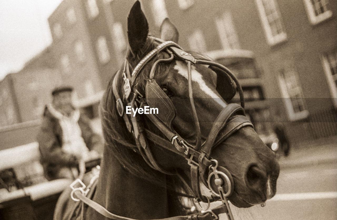 Close-up of horse cart