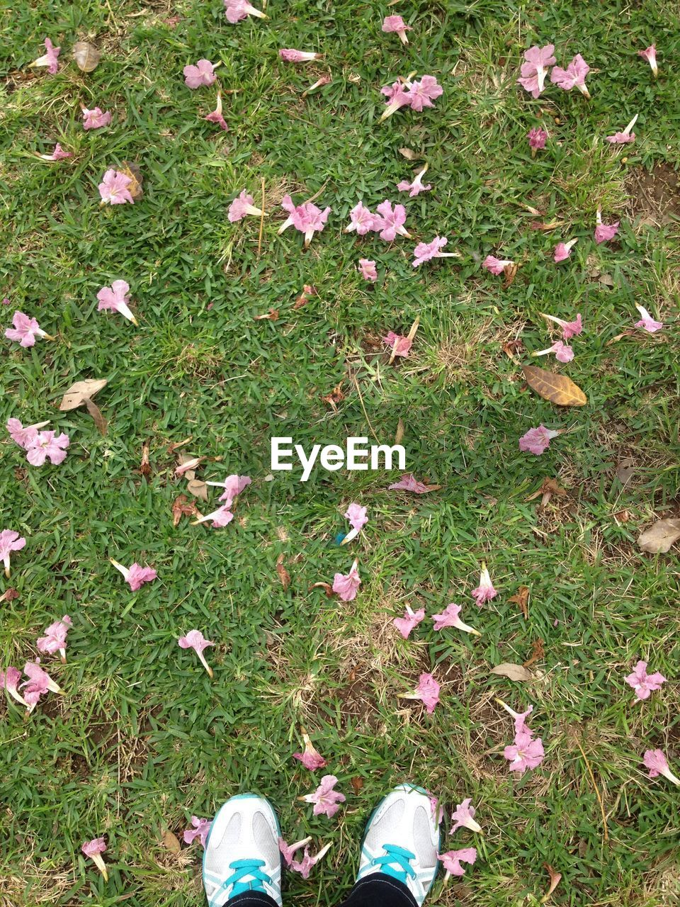 grass, field, low section, high angle view, nature, day, pink color, outdoors, human leg, one person, standing, real people, autumn, leaf, flower, growth, human body part, plant, beauty in nature, one woman only, people, adult