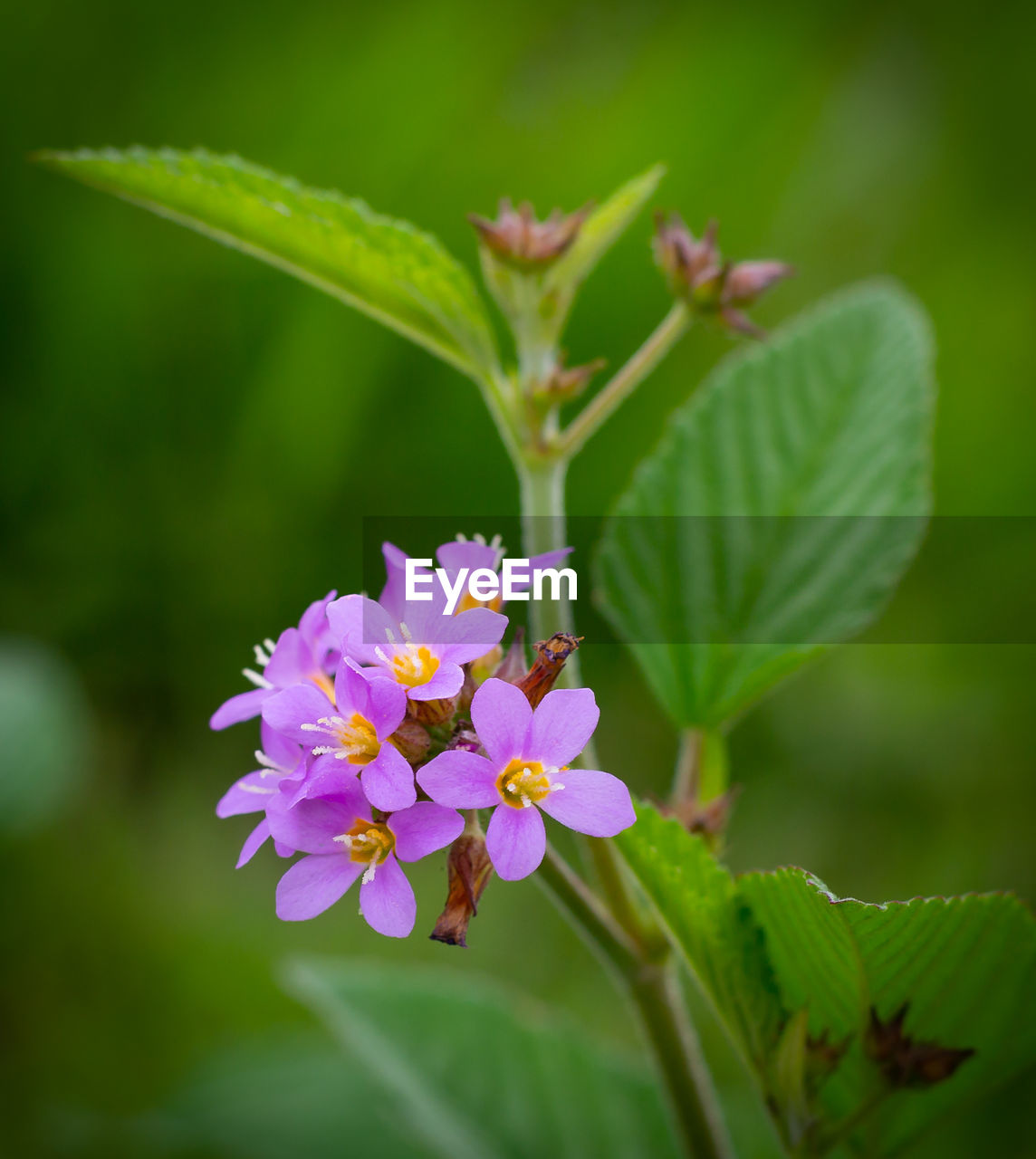 flower, flowering plant, plant, freshness, fragility, vulnerability, growth, beauty in nature, petal, close-up, plant part, leaf, flower head, inflorescence, nature, green color, focus on foreground, pink color, day, no people, outdoors, purple