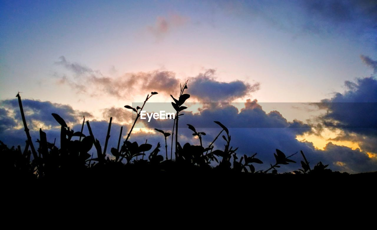 sky, silhouette, sunset, cloud - sky, beauty in nature, nature, plant, growth, no people, tranquility, tranquil scene, scenics - nature, outdoors, field, flower, dusk, low angle view, land, orange color, back lit