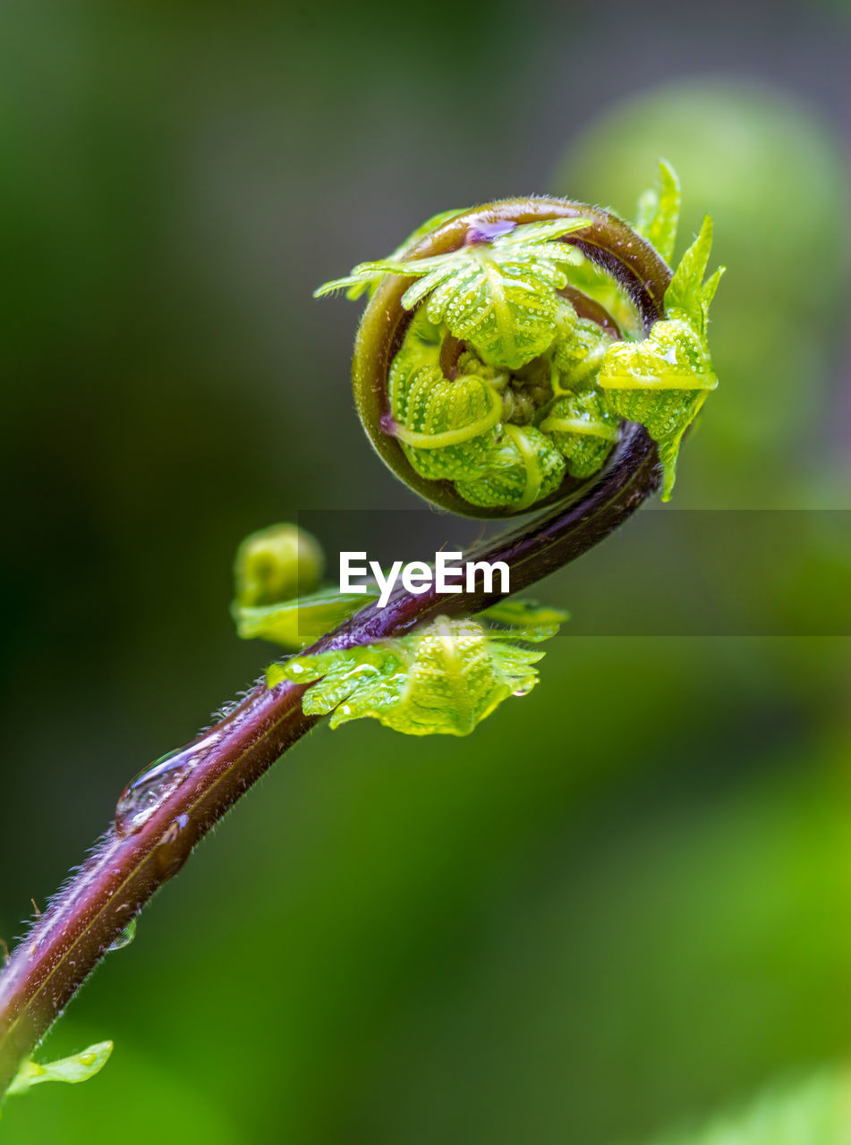 growth, plant, focus on foreground, close-up, green color, beauty in nature, beginnings, nature, no people, flower, fragility, freshness, vulnerability, tendril, day, flowering plant, bud, new life, plant stem, outdoors