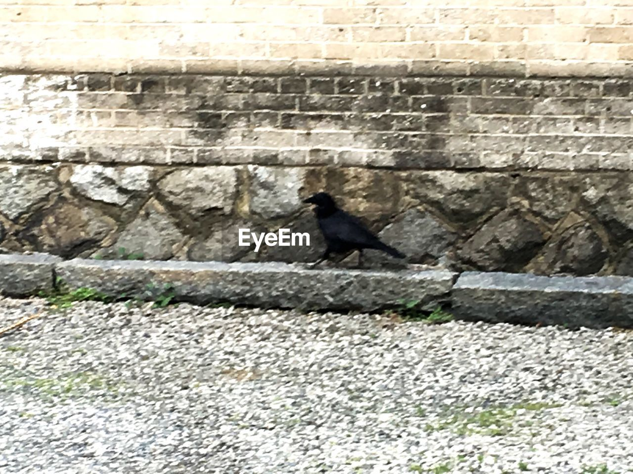 animal themes, one animal, animals in the wild, bird, animal wildlife, day, outdoors, crow, perching, built structure, raven - bird, architecture, sunlight, no people, nature, retaining wall