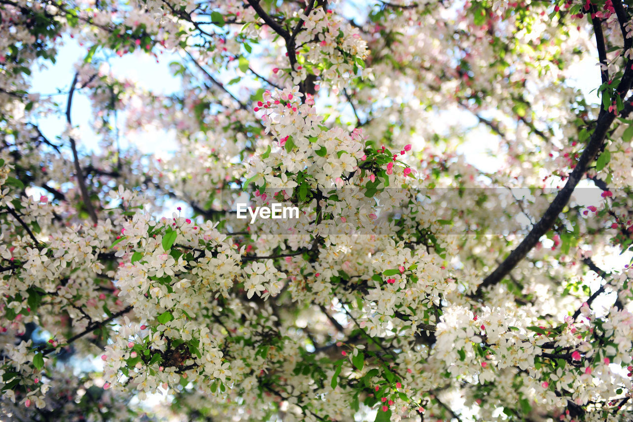 plant, tree, growth, flower, fragility, flowering plant, blossom, springtime, vulnerability, beauty in nature, freshness, branch, day, nature, no people, low angle view, cherry blossom, outdoors, selective focus, close-up, cherry tree, flower head, spring