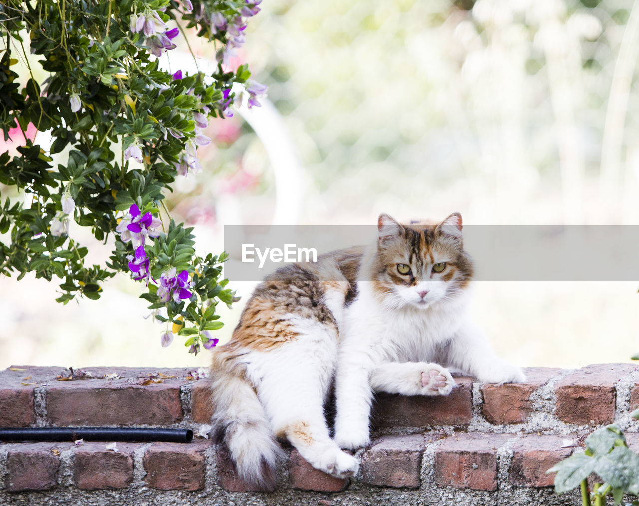 feline, cat, animal themes, mammal, animal, domestic cat, pets, domestic animals, vertebrate, one animal, domestic, plant, flowering plant, no people, wall, flower, relaxation, day, focus on foreground, nature, whisker