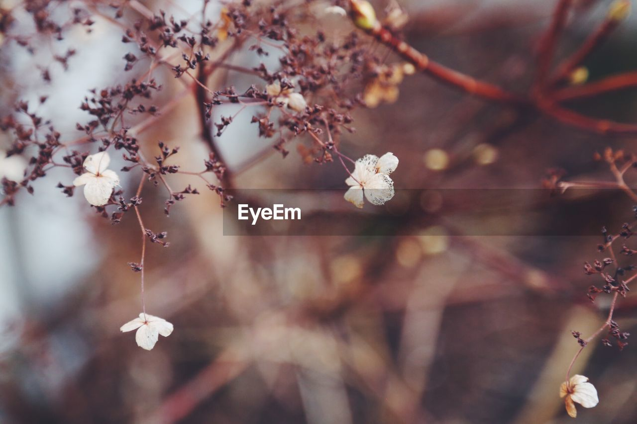 growth, fragility, nature, flower, blossom, tree, branch, twig, beauty in nature, no people, hanging, close-up, outdoors, day, freshness